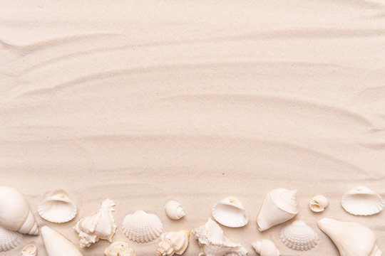 Sea shells with white sand. Tropical background