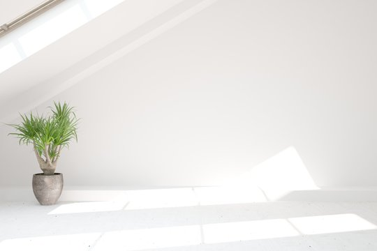 Empty room in white color with home plant. Scandinavian interior design. 3D illustration
