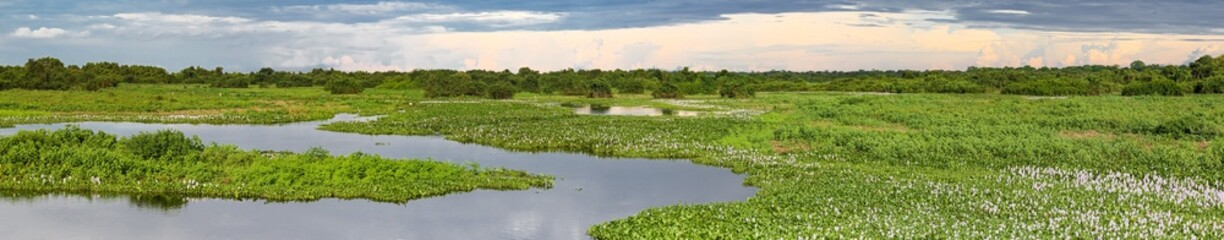 Panorama of meandering river and green water plants in the North Pantanal Wetlands, Mato Grosso, Brazil