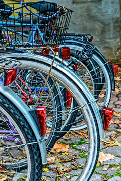 Rear wheels of different bicycles