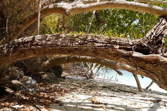 Umgefallener Baumstamm am Strand in Thailand
