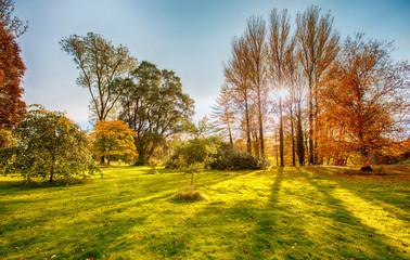 autumn park  near Blarney, Cork, Ireland