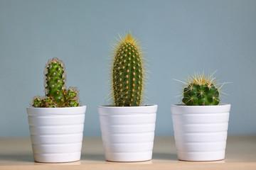 Foto auf Gartenposter Kakteen Small decorative cactus in pot