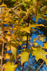 Der Herbst kommt der Sommer geht