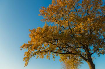 Der einsame bunte Baum