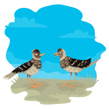 Two larks stand on the grass, blue sky on the background, vector characters of birds.
