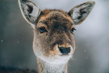 Beautiful deer in winter.  Wall mural