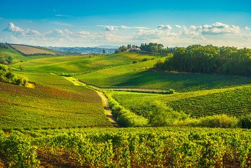Foto op Canvas Toscane Chianti vineyards and panorama at sunset. Vinci, Tuscany, Italy
