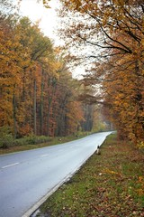 road in autumn