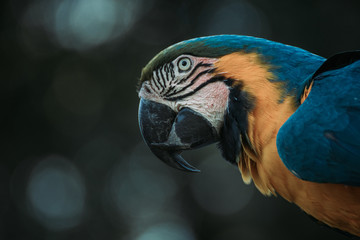 Beautiful parrot head