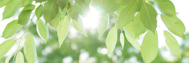 新緑木漏れ日