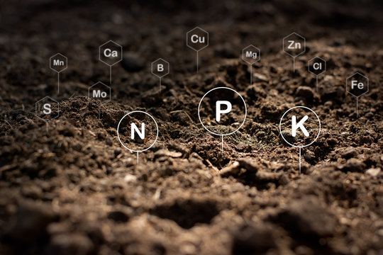 The fertile loamy soil for planting with the iconic technology in soil is the essential food of plants.