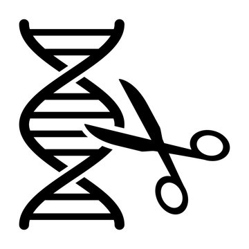DNA gene / genome editing with scissors or eugenics flat vector icon for science apps and websites