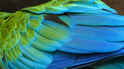 Close up of colorful bird feathers of Red and Green Macaw, exotic natural textured background in green and blue, Chapada dos Guimarães, Mato Grosso, Brazil