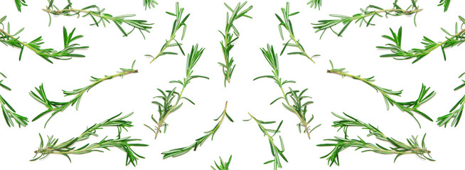 Wide background with pattern of green rosemary sprigs on white. Natural fresh herbs flat lay. Food creative widescreen backdrop