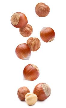 Falling delicious hazelnuts, isolated on white background