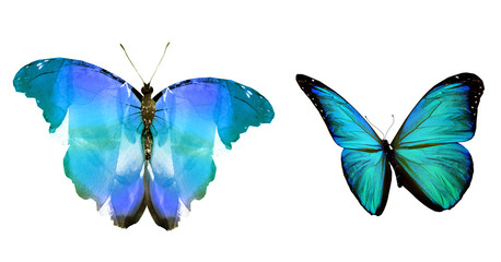 Two natural and watercolor butterflies , isolated on white background