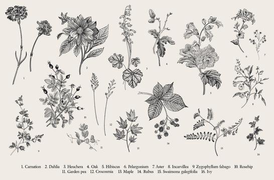 Vintage vector botanical illustration. Set. Autumn flowers. Black and white..