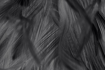 Beautiful dark black feather pattern texture background