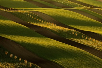 Brown fields with green belts of trees and grass in spring waves in warm evening sun