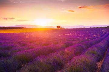 Lavender firlds at sunset in Provence, France. Beautiful summer landscape