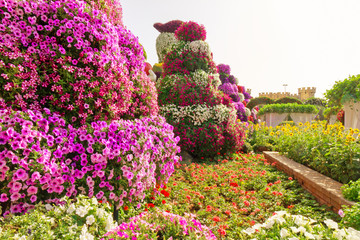 Dubai, UAE - Nov 10, 2019: Floral towers in Miracle garden, landscape view.