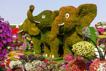 Dubai, UAE - Nov 10, 2019: Elephants in Miracle garden, landscape view.
