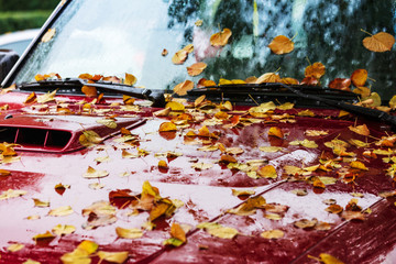 Car covered with autumn leaves