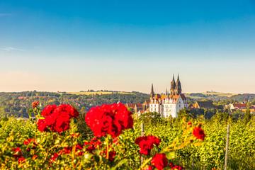 Meißen, Stadtansicht mit Albrechtsburg und Weinberg