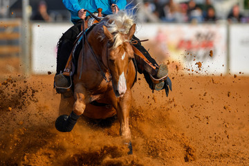 The front view of a rider stopping a horse in the sand.