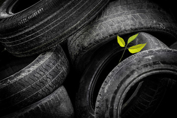 A young green tree makes its way through a bunch of old car tires. A bunch of old tires from used cars. Environmental pollution.