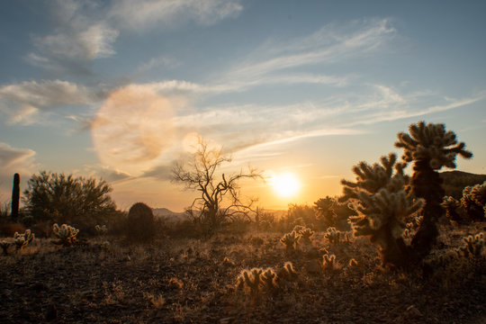 Sonoran Desert in the late afternoon