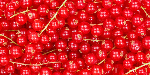Wall Mural - Red currants berry fruits collection food background banner berries fresh fruit