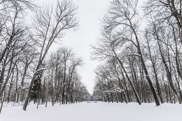 Park Alley Under Snow Cover with Bare Trees