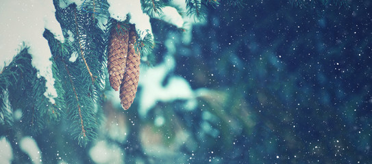 Winter Fir Branches and Pine Cones Covered With Falling Snowflakes, Horizontal