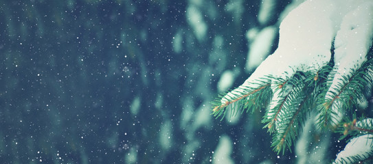 Photo sur Aluminium Arbre Winter Season Holiday Evergreen Christmas Tree Pine Branches Covered With Snow and Falling Snowflakes, Horizontal