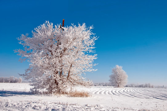 Windmill in Tree with Snow on Branches