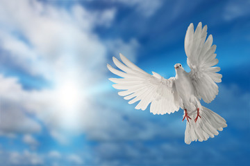 Foto En Lienzo - white dove flying on sky in beautiful light for freedom concept