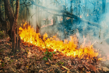 Obraz Australia bushfires, The fire is fueled by wind and heat. - fototapety do salonu