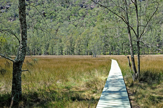 The open salt marsh with a woden path in the middle on the Benowie walking track in Ku-Ring-Gai National Park, New South Wales, Australia.