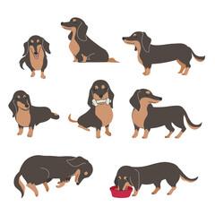 犬 ポーズ 表情 ミニチュアダックスフンド バラエティ