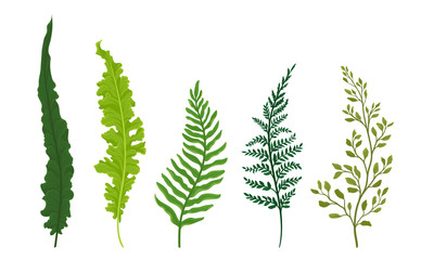 Ferns Set. Botanical Detailed Vector Illustrated Collection