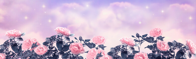 Foto auf Acrylglas Flieder Fantasy dreamy background of magical morning or evening sky with fabulous romantic tender pink rose flowers garden, shining stars and mysterious clouds, idyllic tranquil scene, wide panoramic banner