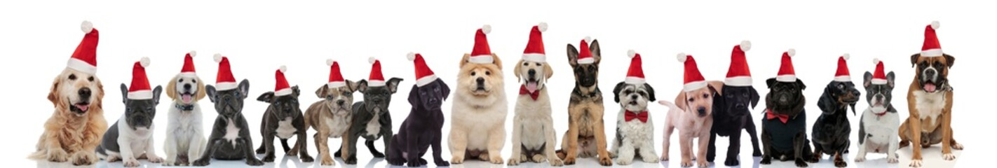 many cute dogs wearing santa claus hats