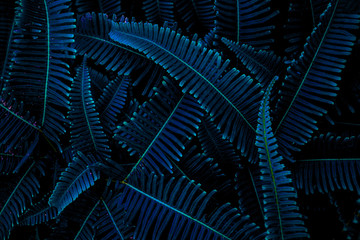 Wall Mural - abstract green texture, nature background, tropical leaf