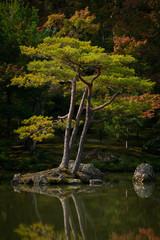 tree on small island