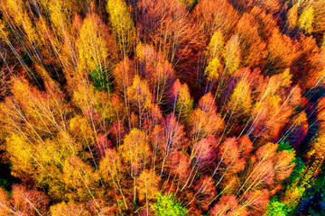 Tuinposter Baksteen Aerial view of autumn forest . Amazing landscape , trees with red and orange leaves in day, National Park Livaditis Xanthi, Greece