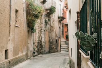 Fototapeta selective focus of green cactus near narrow street in ragusa, italy