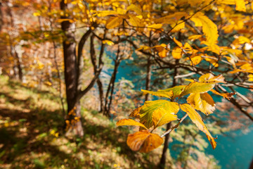 colorful autumn leaves in the foreground