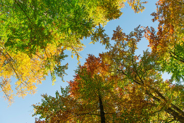 Autumnally colorful treetops